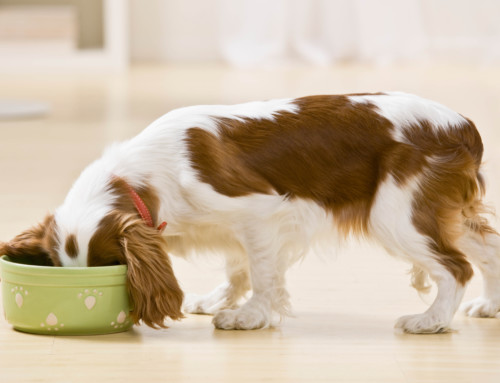 Dog Food Recipe: Brown Rice, Carrots, and Chicken